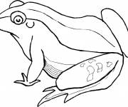 Coloring pages Striped adult frog