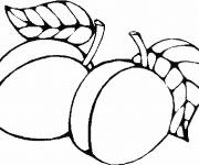 Coloring pages Apricot Fruit