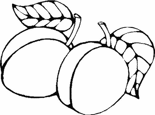 Free coloring and drawings Apricot Fruit Coloring page