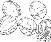Coloring pages Dry Fruit