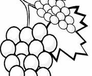 Coloring pages Grape fruit tree