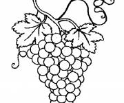 Coloring pages Grapes
