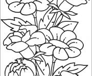 Coloring pages Beautiful flowers