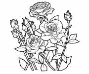 Coloring pages Garden Flowers in Color