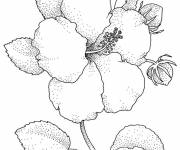 Coloring pages Realistic Flower Image