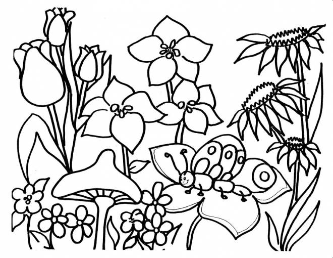 Free coloring and drawings Kindergarten Coloring page