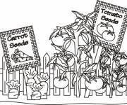 Coloring pages Tomatoes and Carrots in the garden