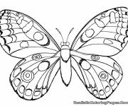 Coloring pages Beautiful butterfly