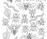 Coloring pages Different insects