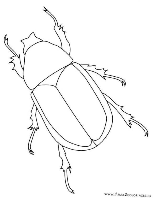 Free coloring and drawings Easy insect Coloring page
