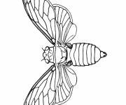 Coloring pages Flying insect