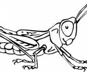 Coloring pages Grasshopper Insects