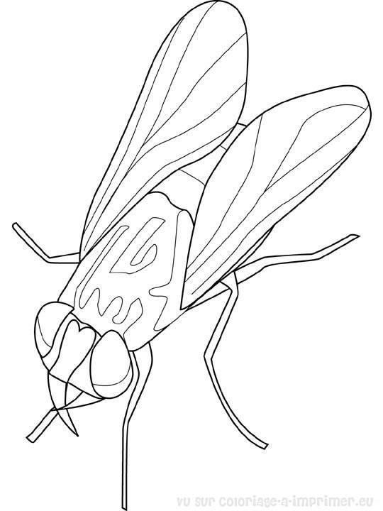 Free coloring and drawings Insect fly Coloring page