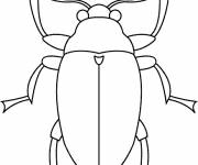 Coloring pages Insect front view