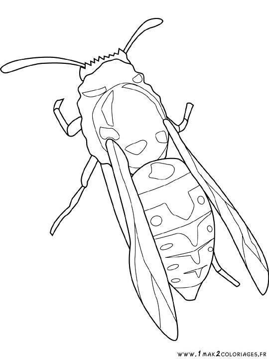 Free coloring and drawings Insect in color Coloring page