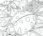 Coloring pages Insect in pencil