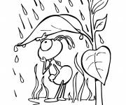 Coloring pages Insect in the rain