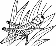 Coloring pages Insect in Winter