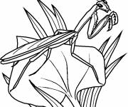 Coloring pages Insect is watching you