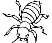 Coloring pages Insect on computer