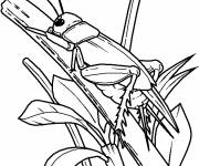 Coloring pages Insect online