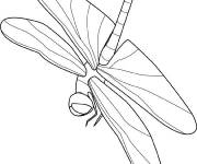 Coloring pages Insect that flies maternal