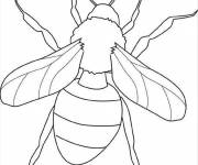 Coloring pages Insect that opens its wings