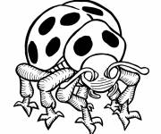 Coloring pages Insect with spots