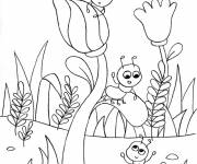 Coloring pages Insects and Flowers