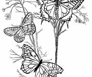 Free coloring and drawings Insects in the Garden Coloring page