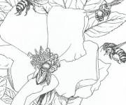 Coloring pages Insects on Flowers