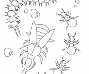 Free coloring and drawings Insects to be colored Coloring page