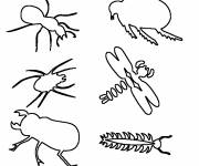 Free coloring and drawings Insects to be completed Coloring page