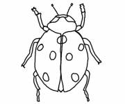 Free coloring and drawings Ladybug front view to cut Coloring page