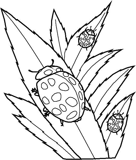 Free coloring and drawings Ladybug Insect on computer Coloring page