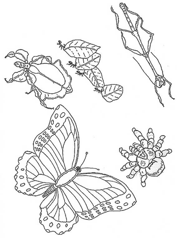 Free coloring and drawings Maternal insects Coloring page