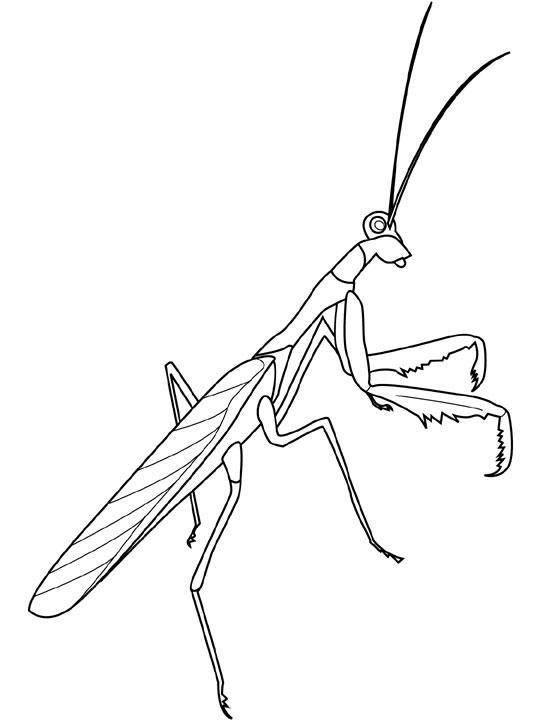 Free coloring and drawings Simple insects Coloring page