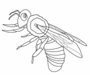 Coloring pages Insect