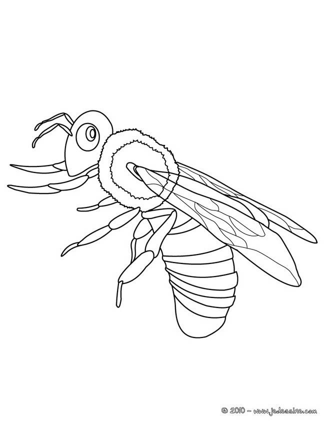 Free coloring and drawings Single bee Coloring page