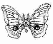Coloring pages Stylized Butterfly Insect