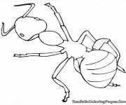 Coloring pages The Ant in black and white