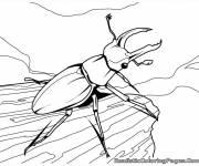 Coloring pages Vector insect