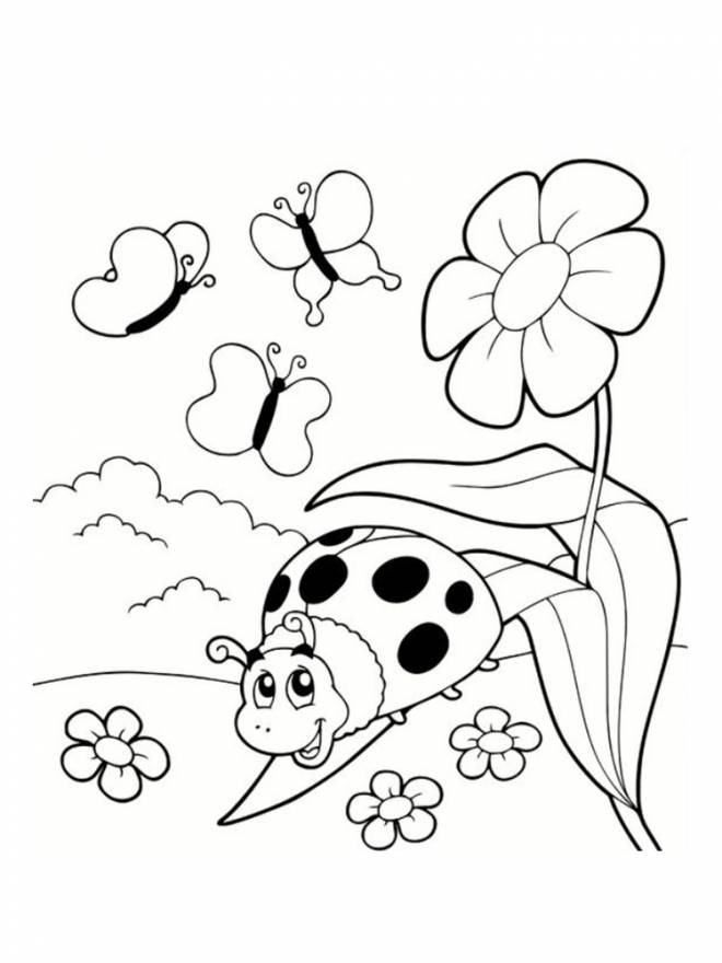 Free coloring and drawings Ladybug and garden insects Coloring page