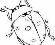 Coloring pages Ladybug and its long antennae