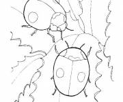 Coloring pages Ladybug couple