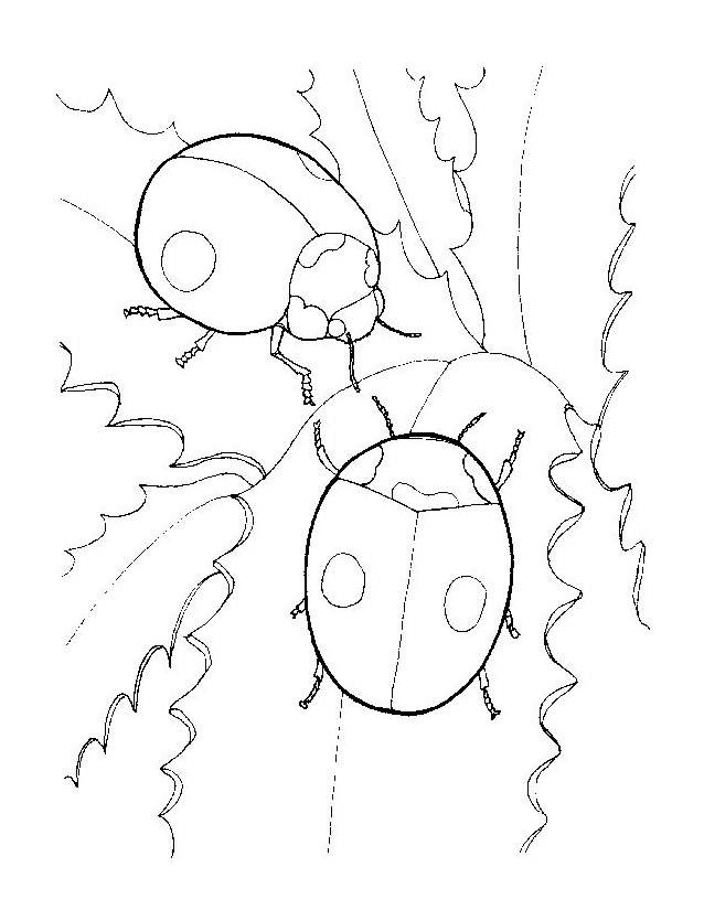 Free coloring and drawings Ladybug couple Coloring page