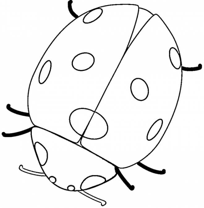 Free coloring and drawings Ladybug in black and red Coloring page
