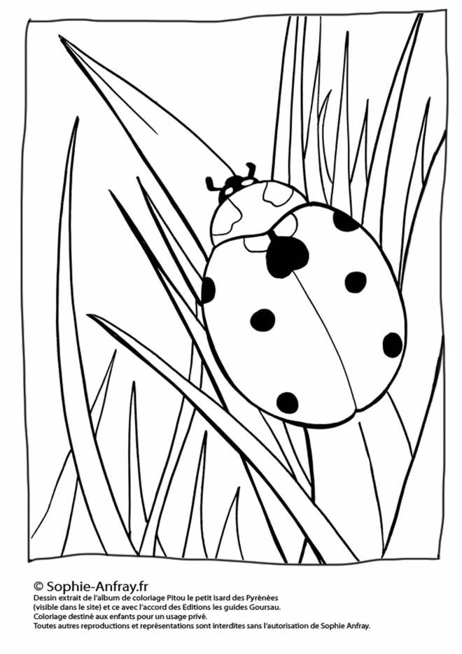 Free coloring and drawings Ladybug in Spring Coloring page
