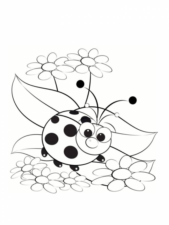 Free coloring and drawings Ladybug model Coloring page