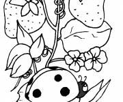 Free coloring and drawings Ladybug on a plant Coloring page